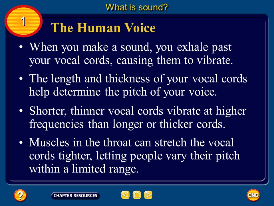What is sound 1. The Human Voice. When you make a sound, you exhale past your vocal cords, causing them to vibrate.