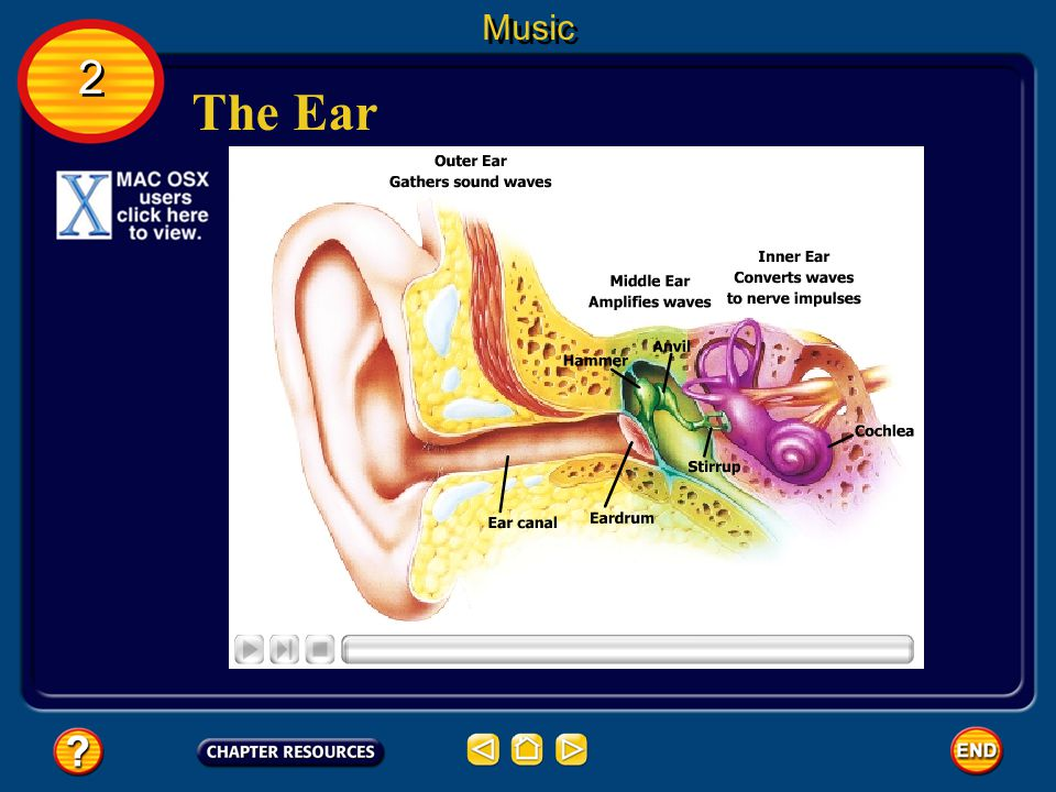 Music 2 The Ear