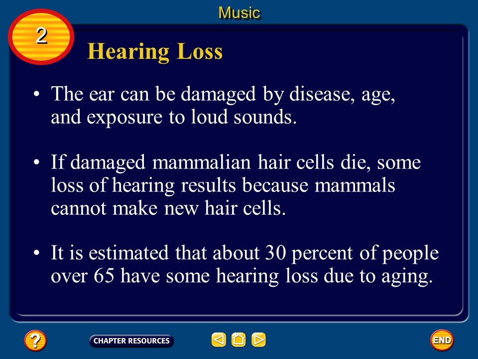 Music 2. Hearing Loss. The ear can be damaged by disease, age, and exposure to loud sounds.