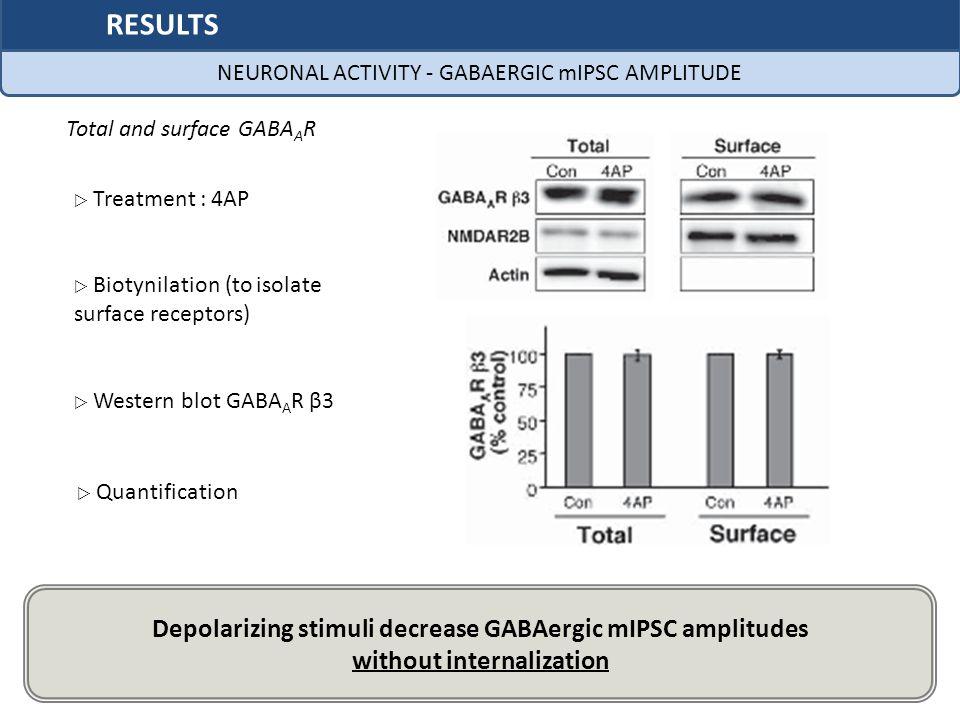 RESULTS Depolarizing stimuli decrease GABAergic mIPSC amplitudes