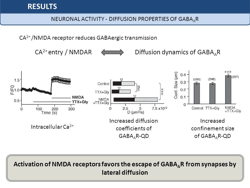 RESULTS CA2+ entry / NMDAR Diffusion dynamics of GABAAR