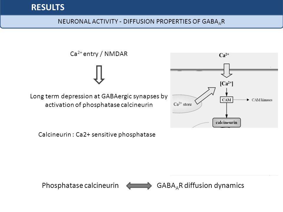 RESULTS Phosphatase calcineurin GABAAR diffusion dynamics