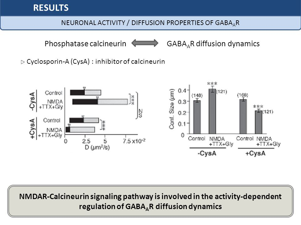 NEURONAL ACTIVITY / DIFFUSION PROPERTIES OF GABAAR