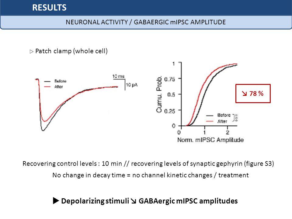  Depolarizing stimuli ↘ GABAergic mIPSC amplitudes
