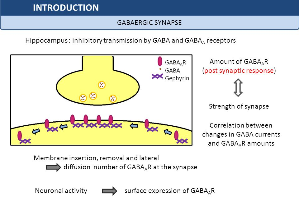 INTRODUCTION GABAERGIC SYNAPSE