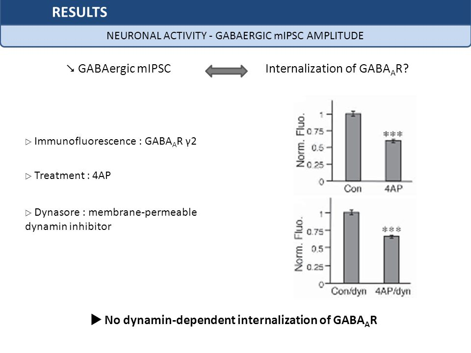  No dynamin-dependent internalization of GABAAR