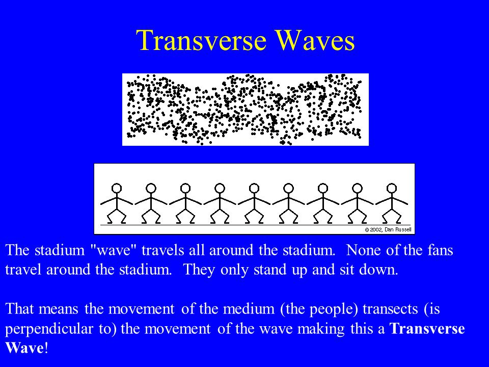 Transverse Waves The stadium wave travels all around the stadium. None of the fans travel around the stadium. They only stand up and sit down.