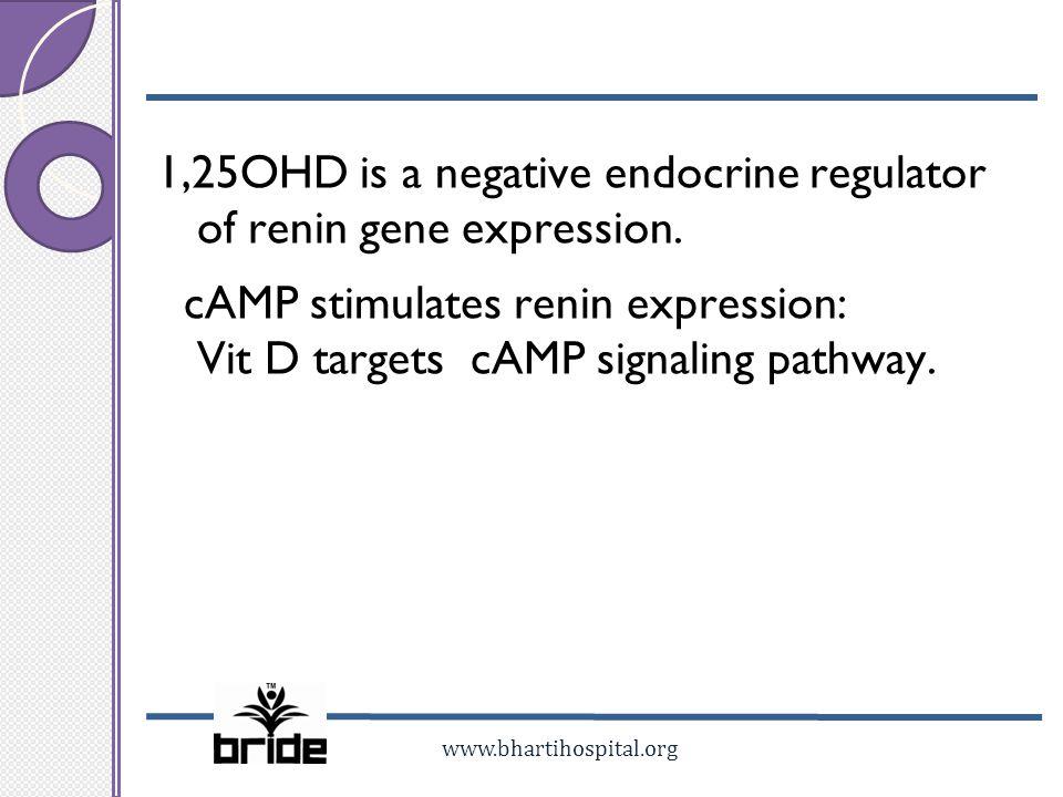 1,25OHD is a negative endocrine regulator of renin gene expression