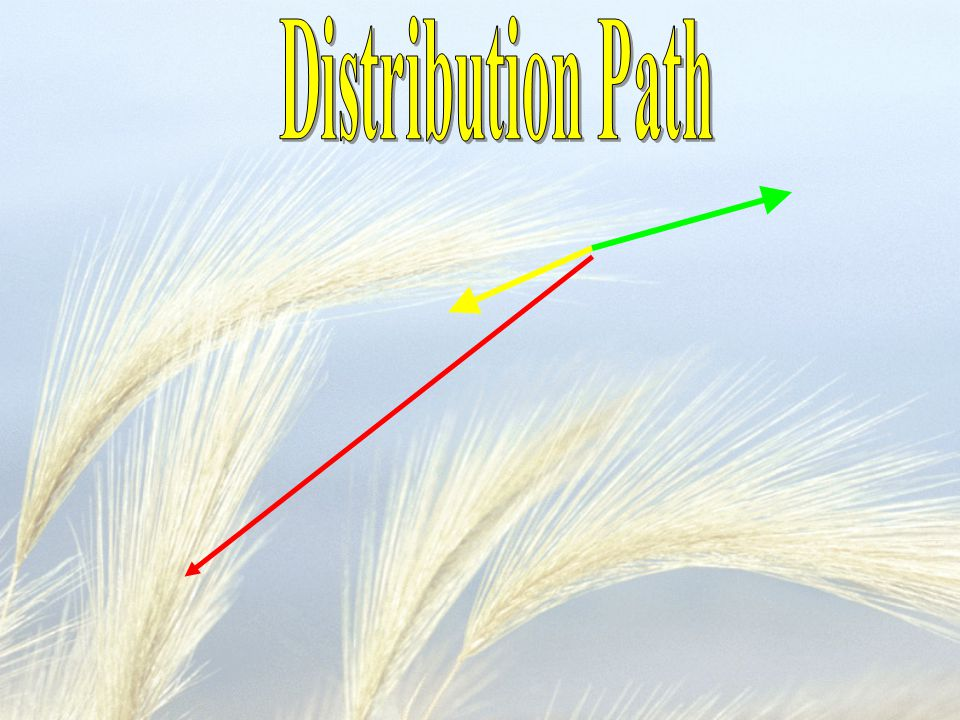 Distribution Path
