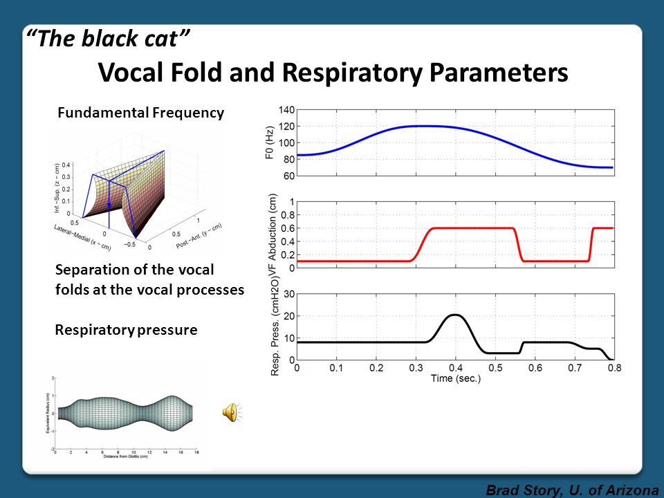 Vocal Fold and Respiratory Parameters