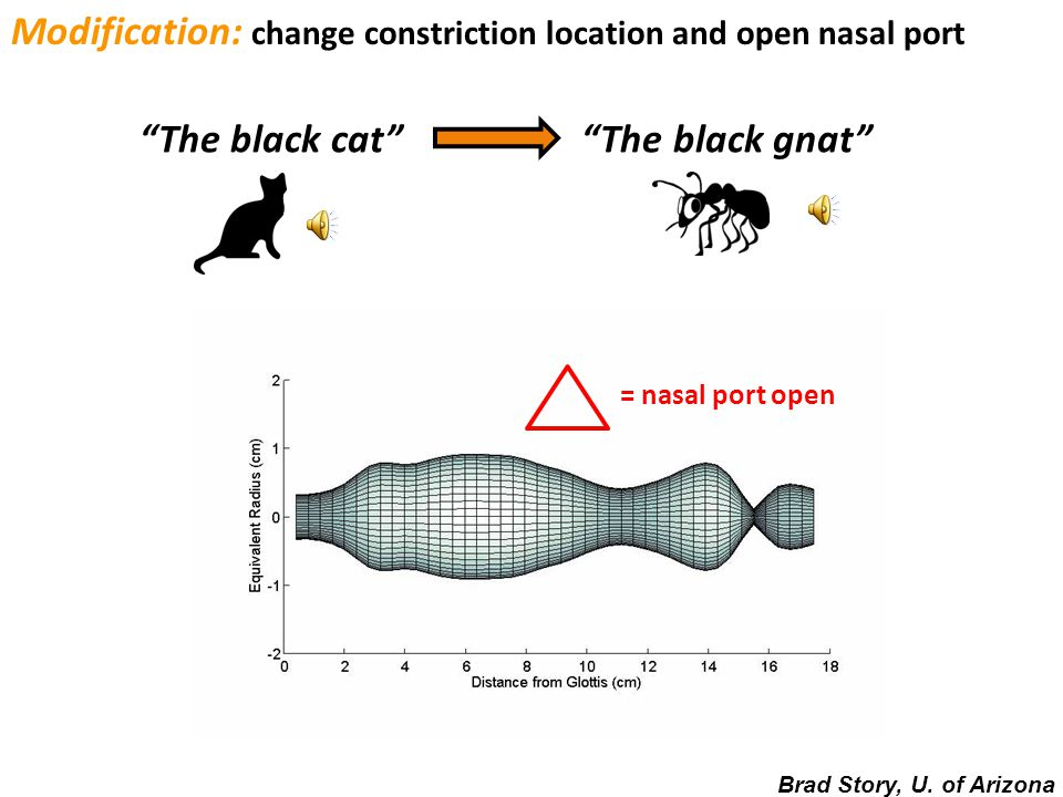 Modification: change constriction location and open nasal port