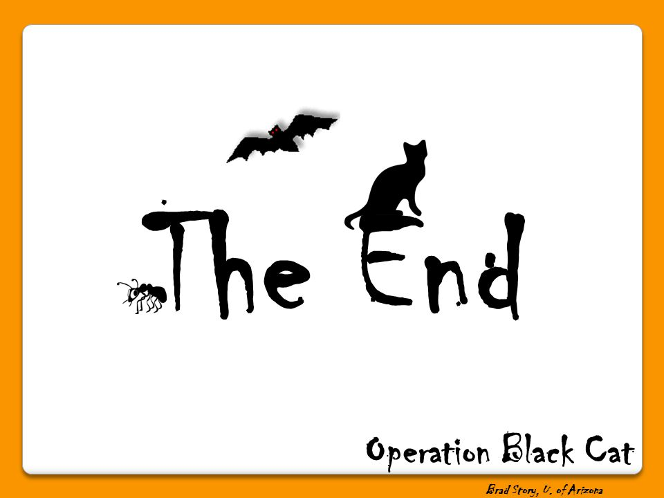 The End Operation Black Cat Brad Story, U. of Arizona