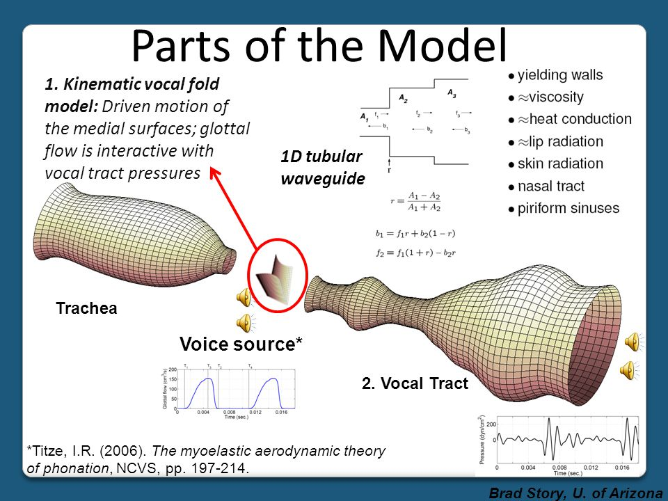 Parts of the Model 1. Kinematic vocal fold model: Driven motion of the medial surfaces; glottal flow is interactive with vocal tract pressures.