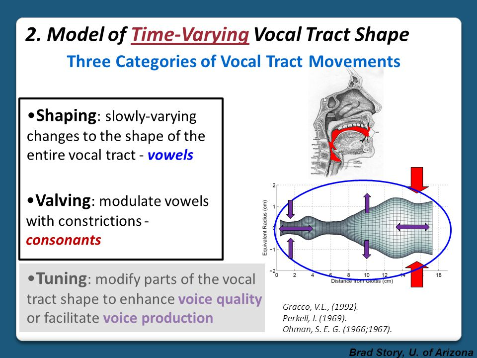 Three Categories of Vocal Tract Movements