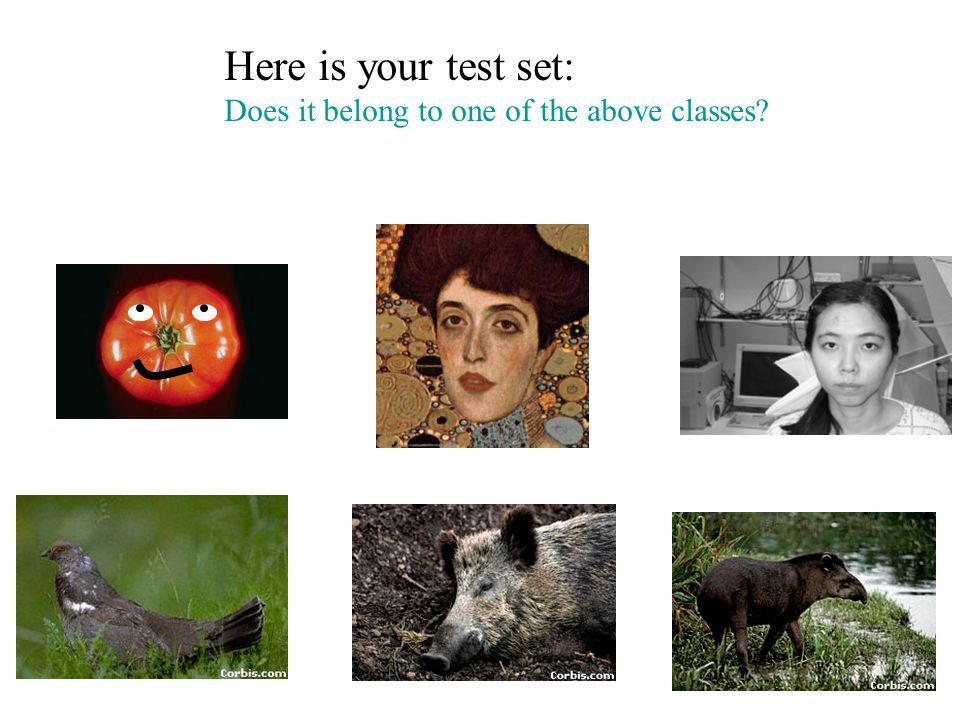 Here is your test set: Does it belong to one of the above classes