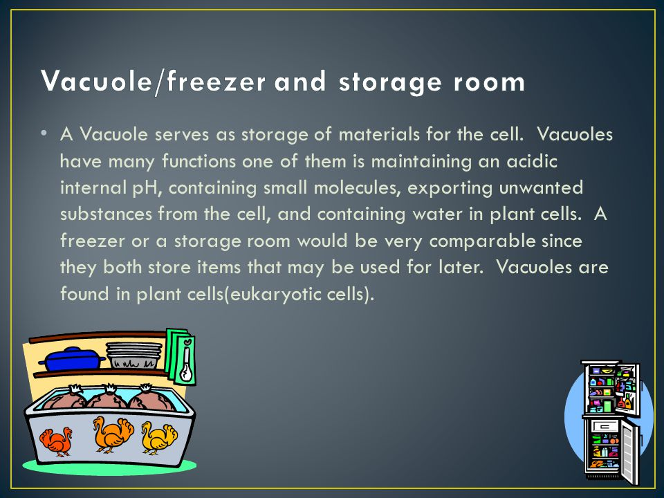 Vacuole/freezer and storage room