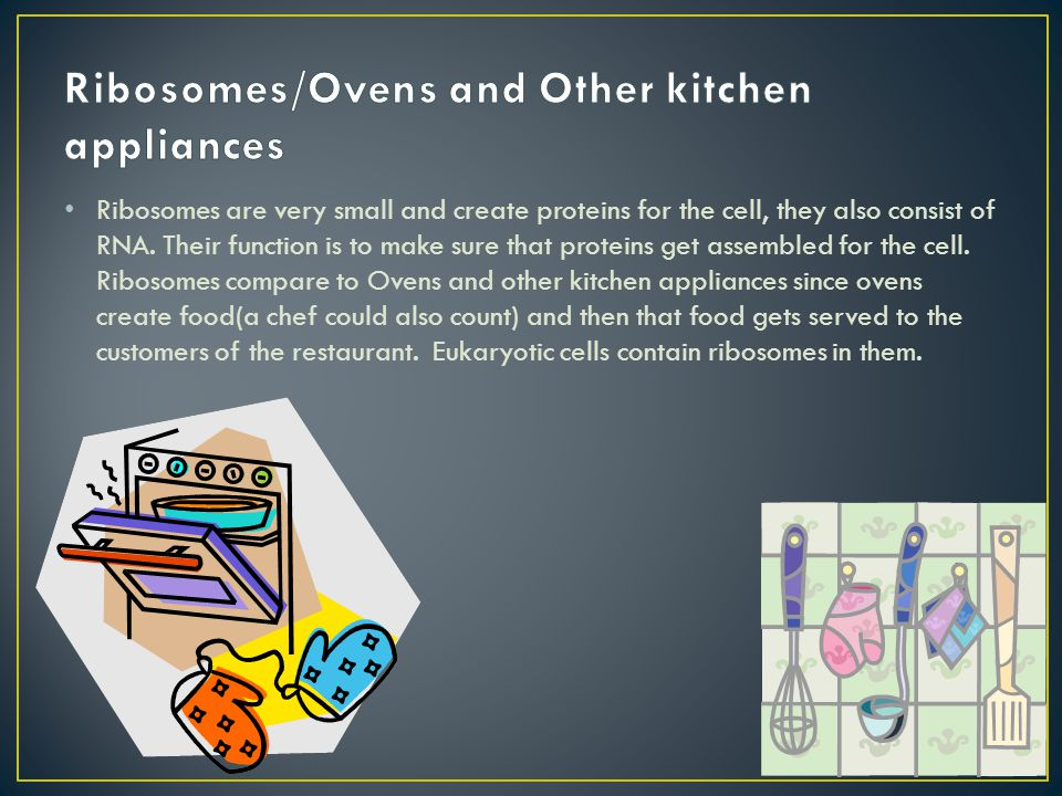 Ribosomes/Ovens and Other kitchen appliances