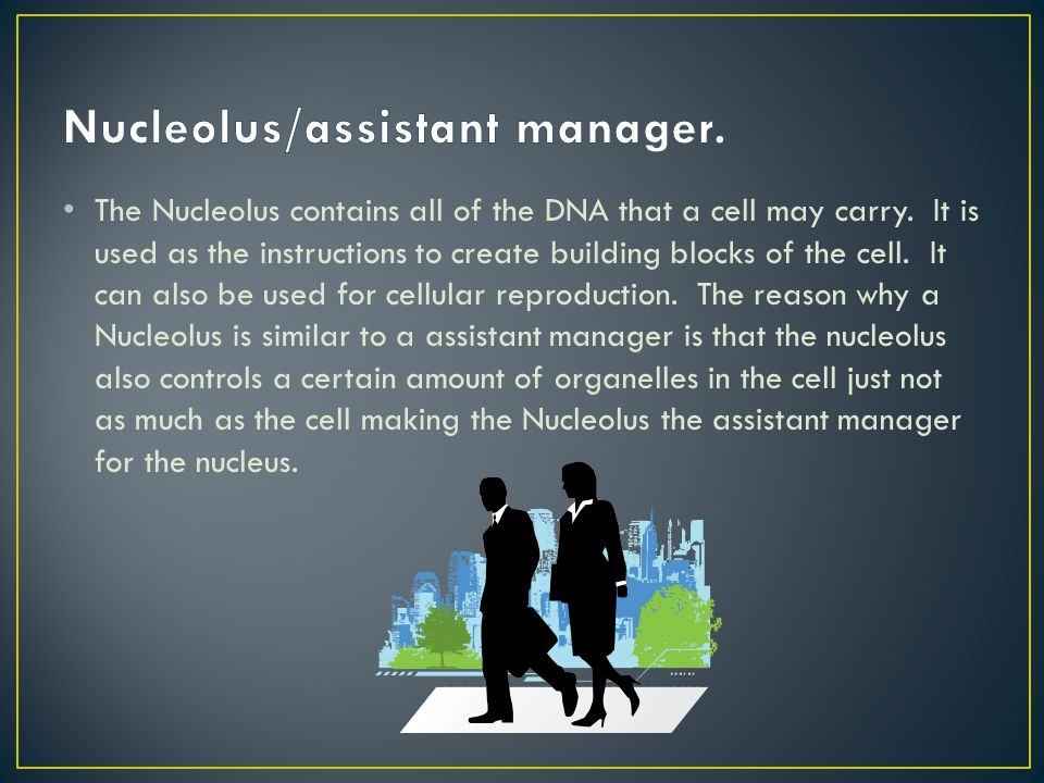 Nucleolus/assistant manager.
