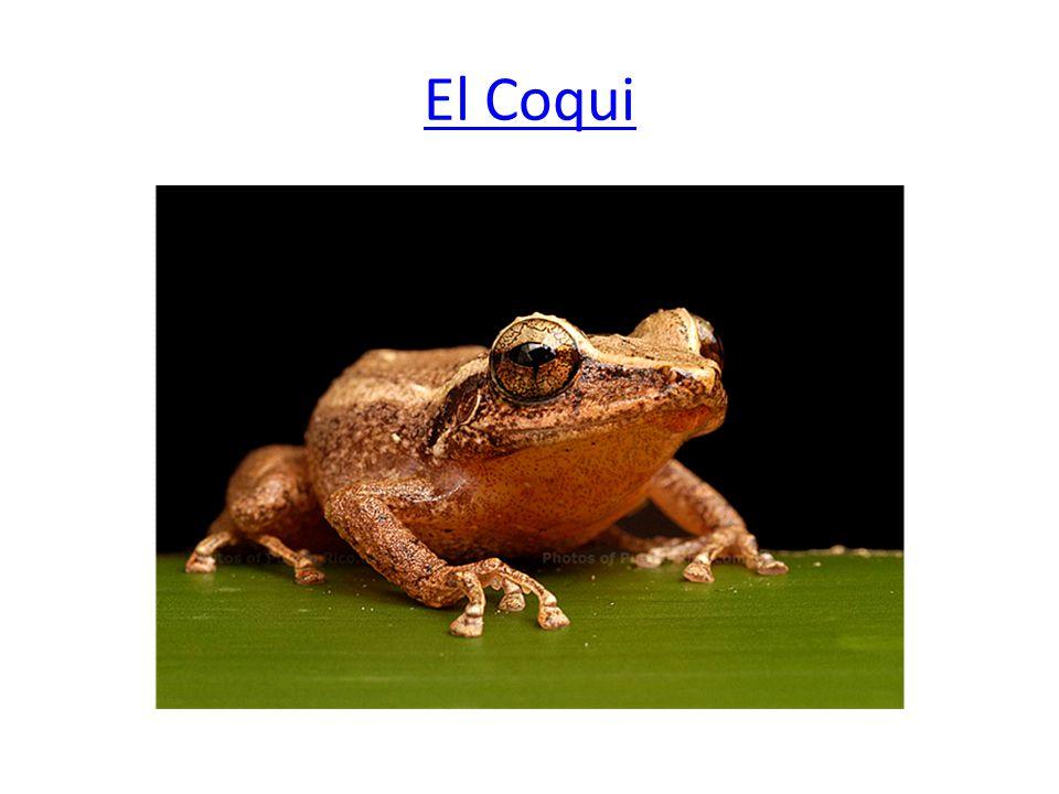 El Coqui