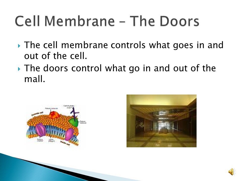 cell organelle analogies