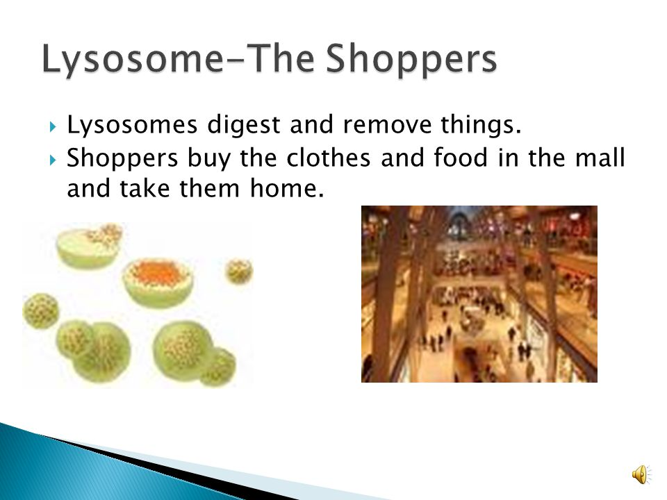 Lysosome-The Shoppers