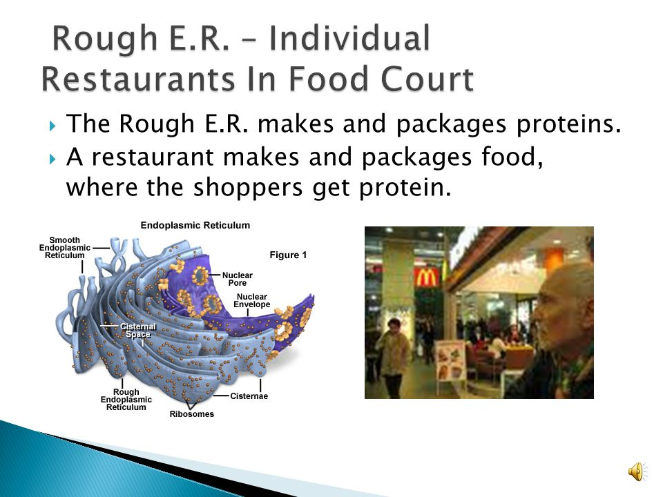 Rough E.R. – Individual Restaurants In Food Court