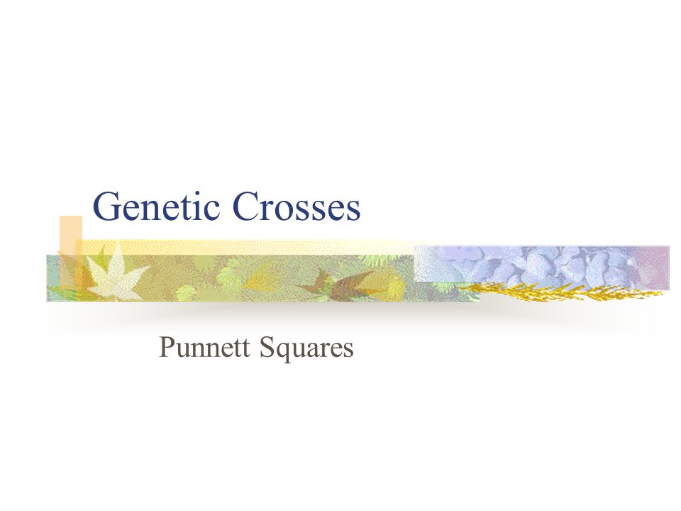 Genetic Crosses Punnett Squares