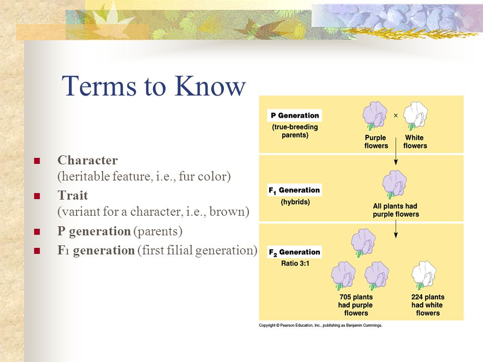 Terms to Know Character (heritable feature, i.e., fur color)