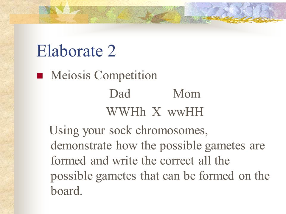 Elaborate 2 Meiosis Competition Dad Mom WWHh X wwHH