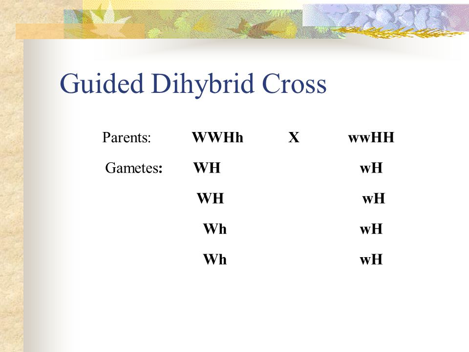 Guided Dihybrid Cross Parents: --- -WWHh ---X -- wwHH Gametes:- WH---