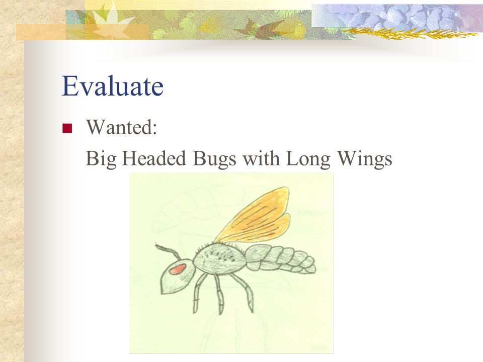 Evaluate Wanted: Big Headed Bugs with Long Wings