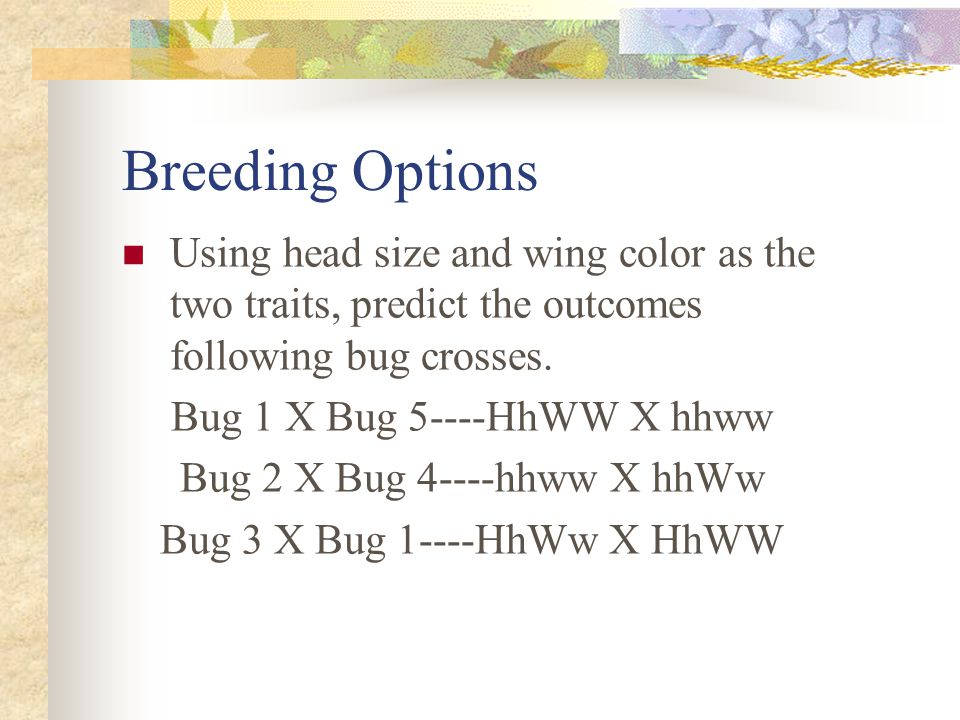 Breeding Options Using head size and wing color as the two traits, predict the outcomes following bug crosses.
