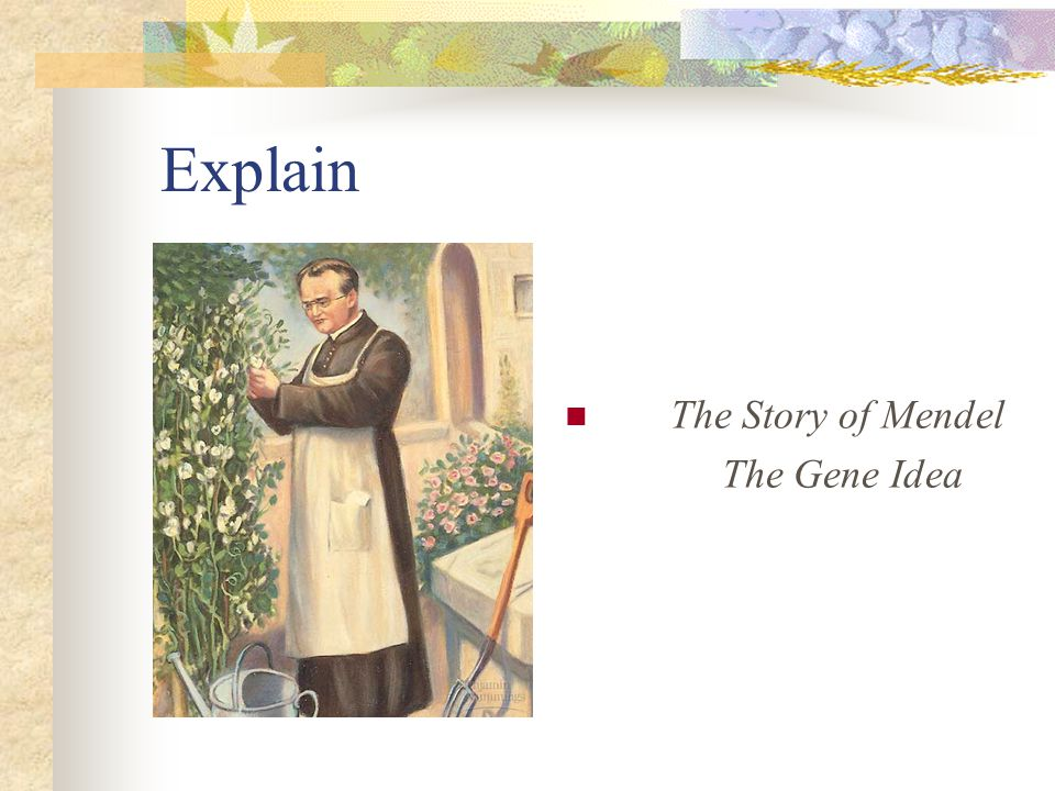Explain The Story of Mendel The Gene Idea