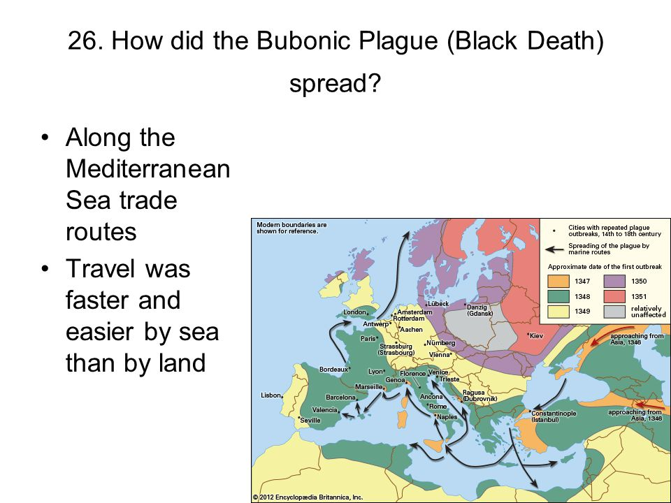 26. How did the Bubonic Plague (Black Death) spread