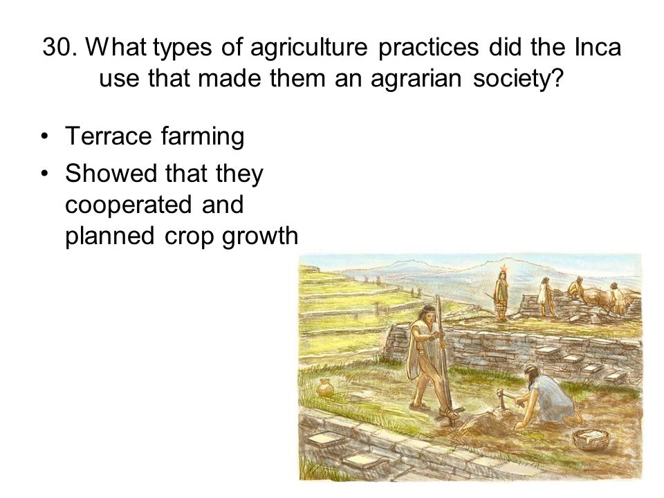 30. What types of agriculture practices did the Inca use that made them an agrarian society