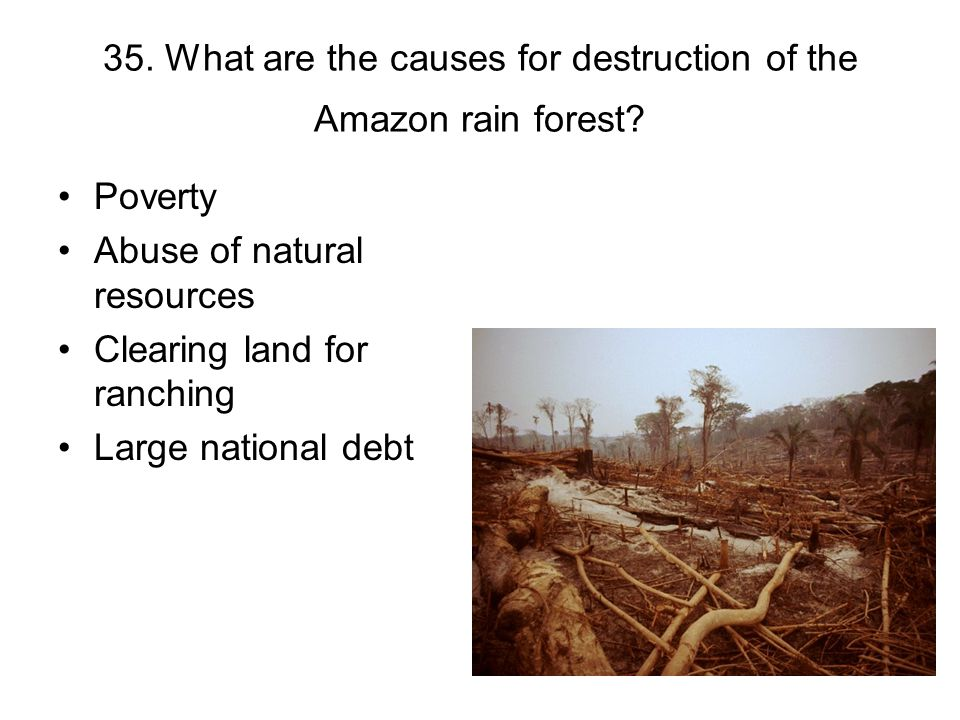 35. What are the causes for destruction of the Amazon rain forest