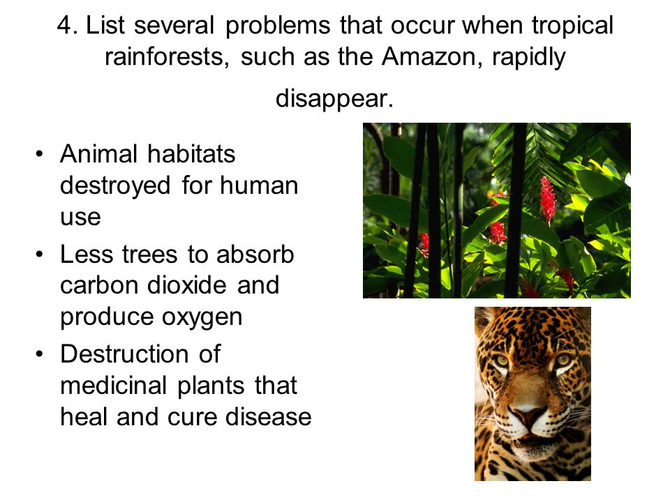 4. List several problems that occur when tropical rainforests, such as the Amazon, rapidly disappear.