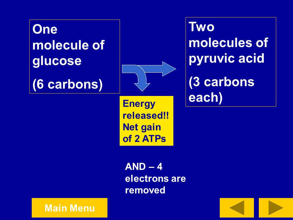 Two molecules of pyruvic acid