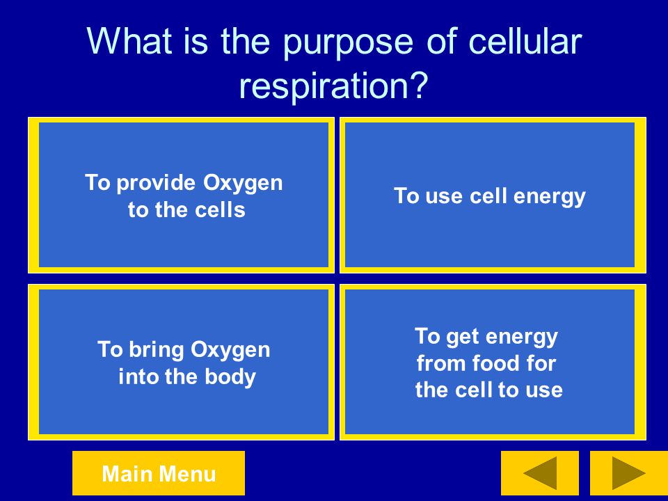 What is the purpose of cellular respiration