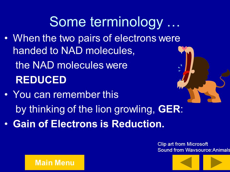 Some terminology … When the two pairs of electrons were handed to NAD molecules, the NAD molecules were.