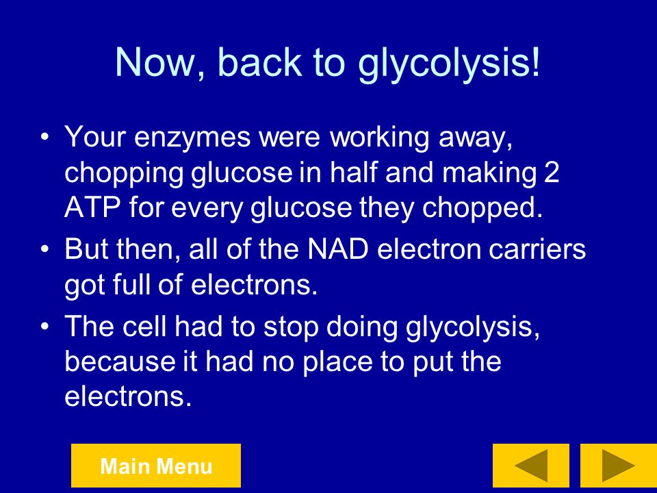 Now, back to glycolysis! Your enzymes were working away, chopping glucose in half and making 2 ATP for every glucose they chopped.