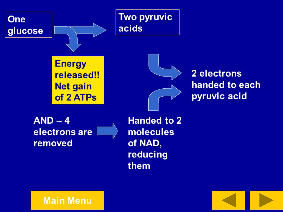 Two pyruvic acids One glucose. Energy released!! Net gain of 2 ATPs. 2 electrons handed to each pyruvic acid.