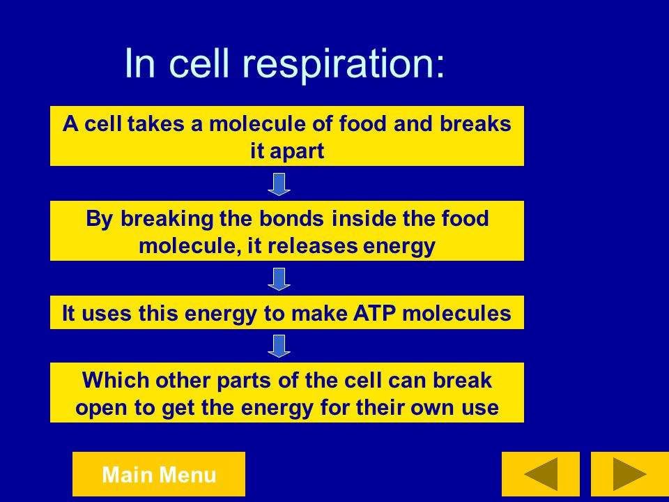 In cell respiration: A cell takes a molecule of food and breaks it apart. By breaking the bonds inside the food molecule, it releases energy.