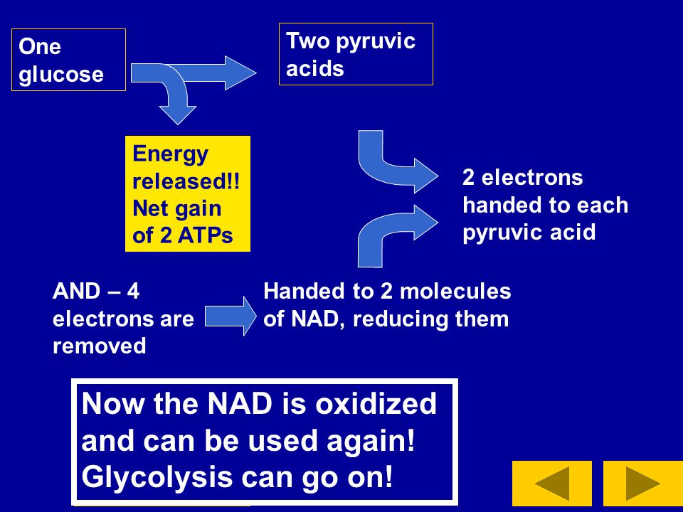 Now the NAD is oxidized and can be used again! Glycolysis can go on!