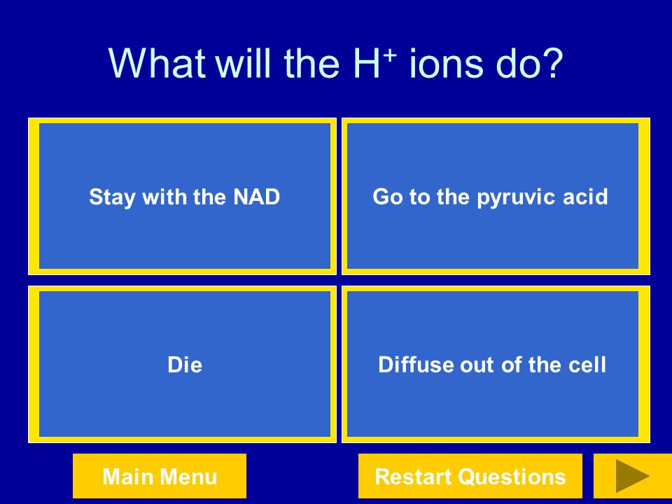 What will the H+ ions do Stay with the NAD Go to the pyruvic acid