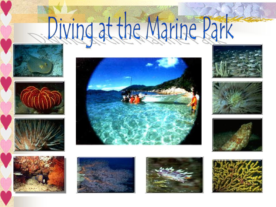 Diving at the Marine Park