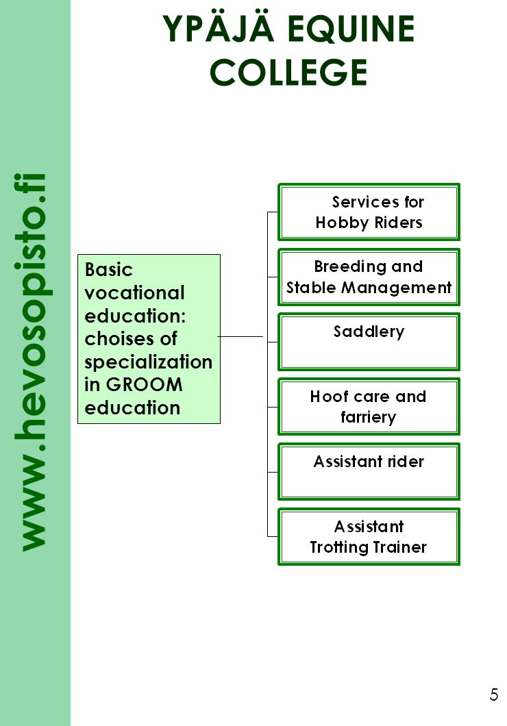 YPÄJÄ EQUINE COLLEGE Basic vocational education: choises of specialization in GROOM education
