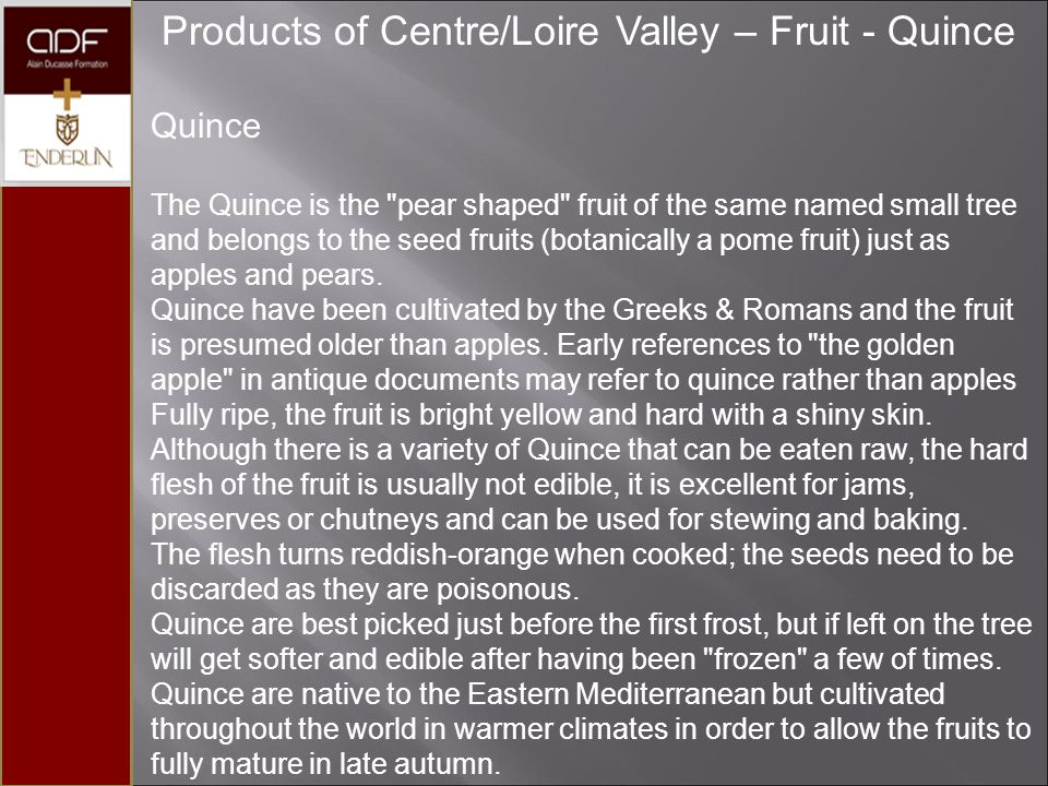 Products of Centre/Loire Valley – Fruit - Quince