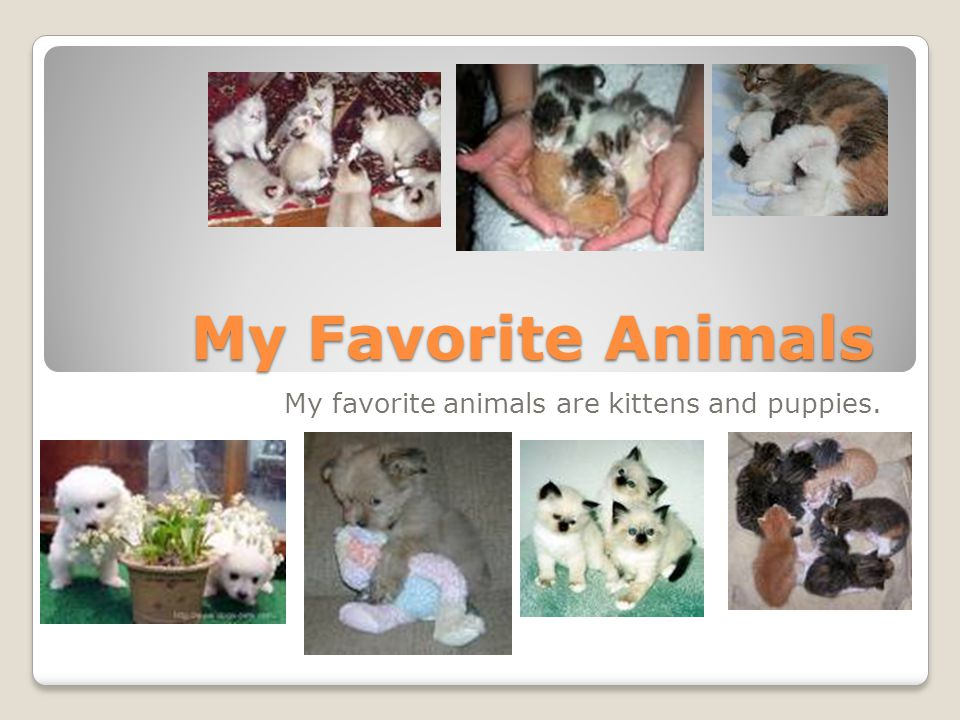 My favorite animals are kittens and puppies.