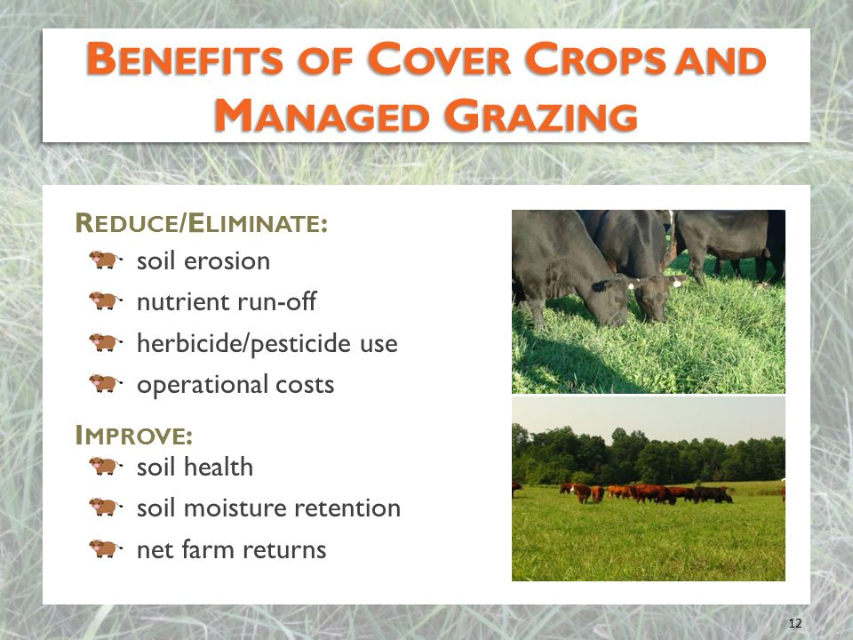 Benefits of Cover Crops and Managed Grazing